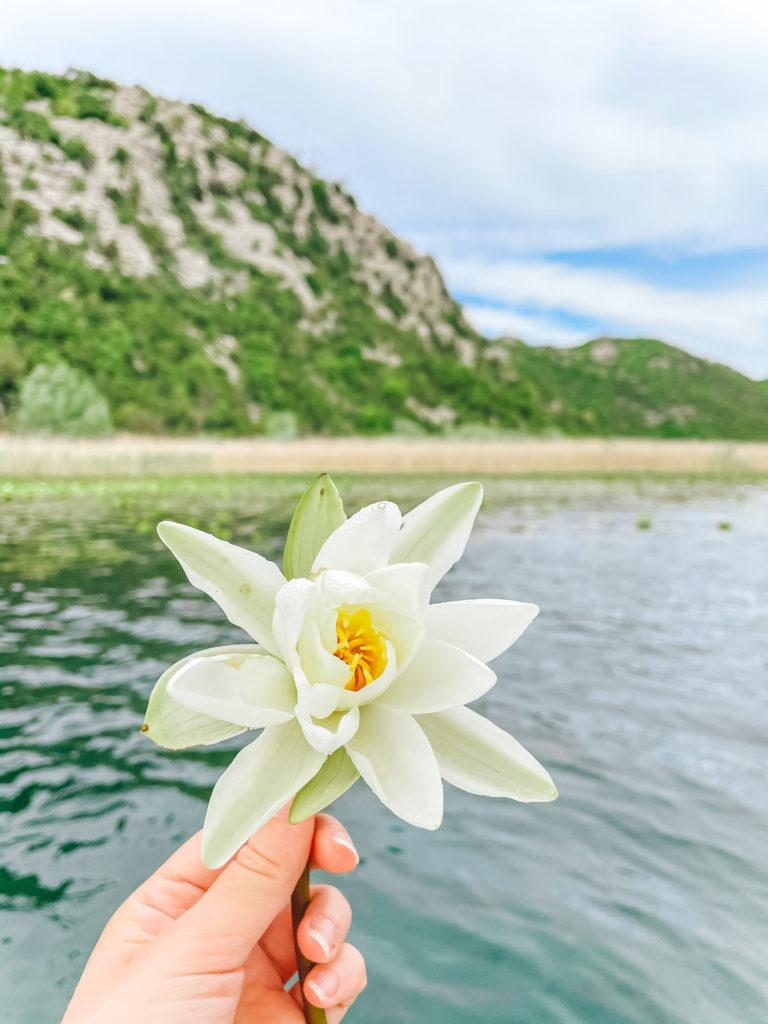 На лодочке по Скадарскому озеру - топ мест в Черногории